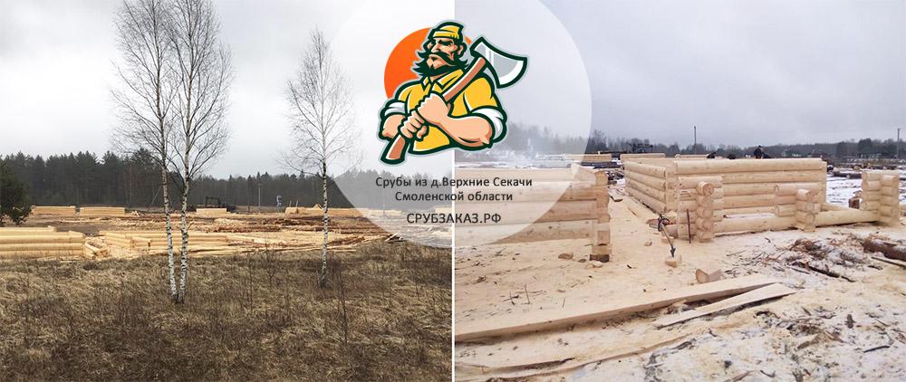 делянка хвойного леса и стройплощадка